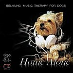 Lola Music Therapy For Dogs: Home Alone