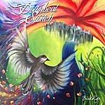 Downbeat Switch Birdseye