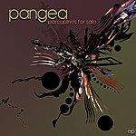 Pangea Porcupines For Sale