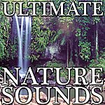 Nature Sounds Nature Sounds (Ultimate Nature Sounds Over 8 Hours Of Nature)