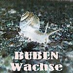 Buben Wachse