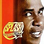 Splash Springbok