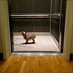 Frozen Inertia Do Not Use Elevators