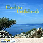 Carlito Bottlebrush
