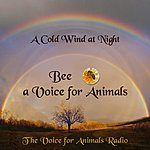 Cover Art: A Cold Wind At Night